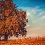 【秋の名盤】午後のお散歩にジョージ・ウィンストン『オータム』