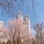 新宿中央公園の桜は三分咲き…くらい